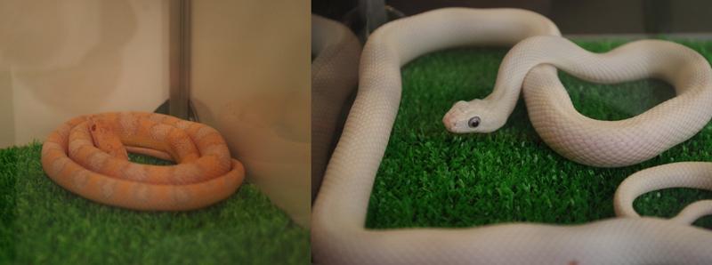 snake02