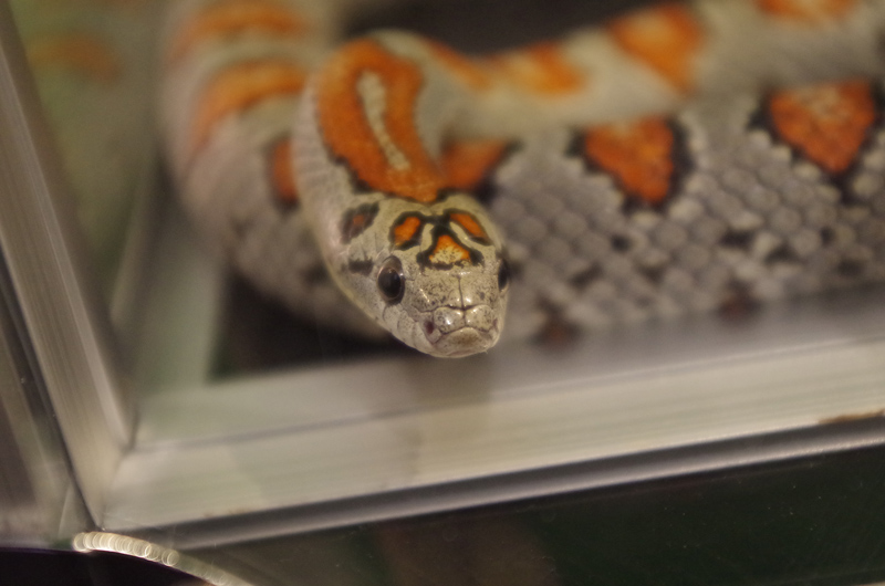 snake03