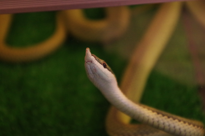 snake06
