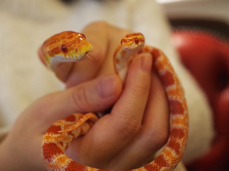 snake09