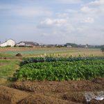 福岡県上毛町でワーキングステイ1~田舎暮らしを体験しよう「まずは環境を整える」