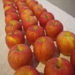 15個のリンゴのゆくえ~韓国個展のウラ側のおはなし
