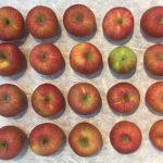 韓国リンゴ計画最終日!~100個のリンゴにいくらかかったのかと現地レポート